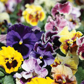 20% off all bedding plants