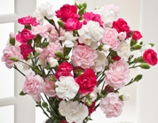 Get 10% Off all flower orders