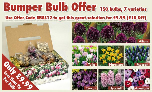 £10 OFF bulb box